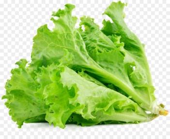 Листья салата - шт